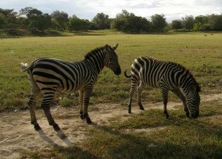 africa safari costa rica